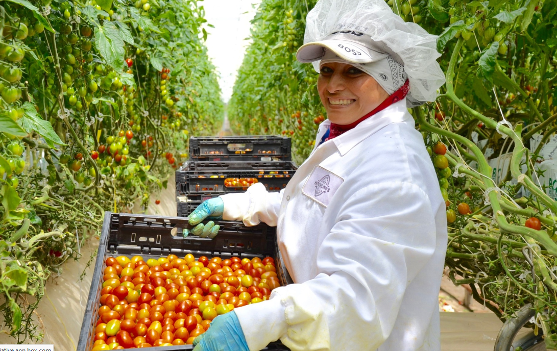 Measuring Pesticide Risk Reduction on Equitable Food Initiative-Certified Farms